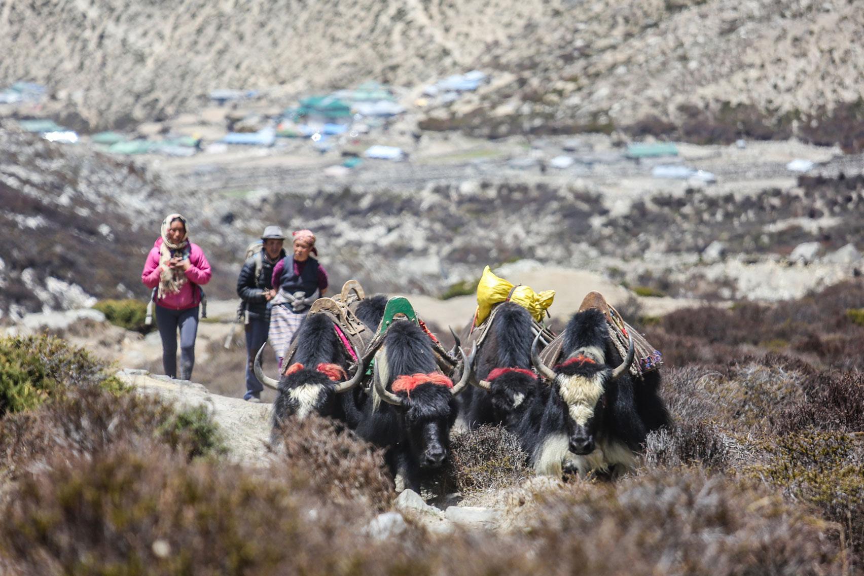 Day 7: Trek from Tengboche (3860m) to Dingboche (6hrs, 4440m)