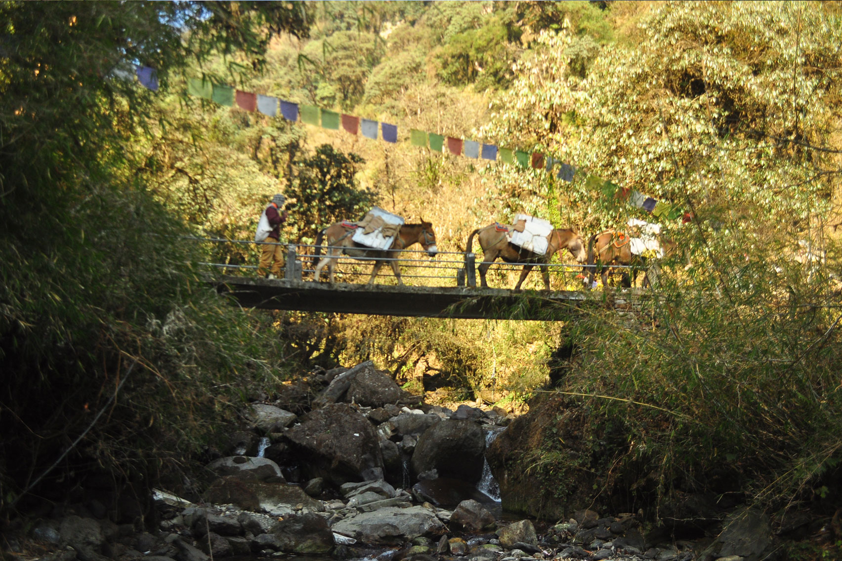 Day 3: Drive from Pokhara to Nayapul (1.5 hrs, 1070m) and trek to Ulleri (5hrs, 1500m)