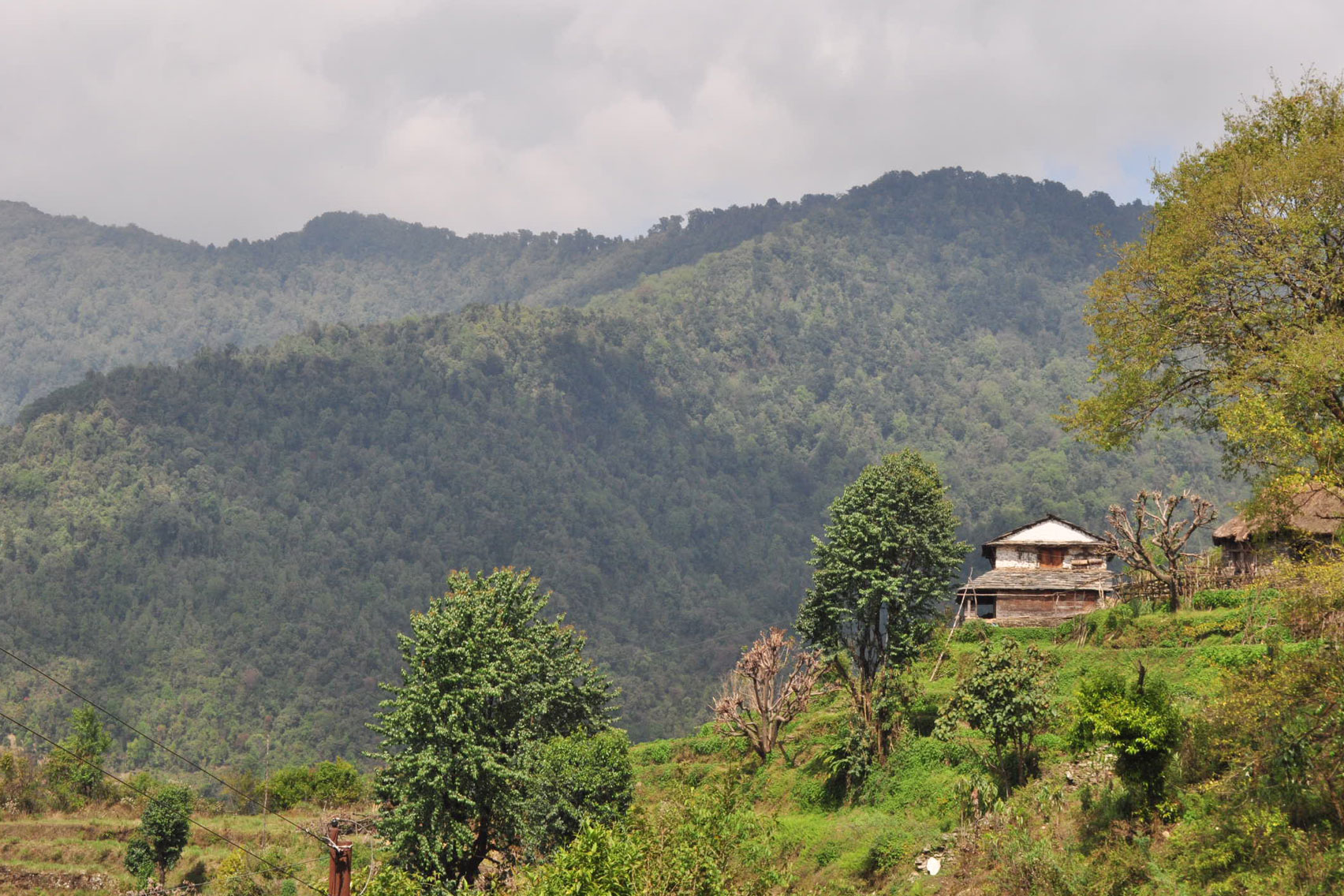 Day 12: Trek from Jhinu (2505m) to Syauli (6hrs, 1100m) and drive to Pokhara (4 hrs)