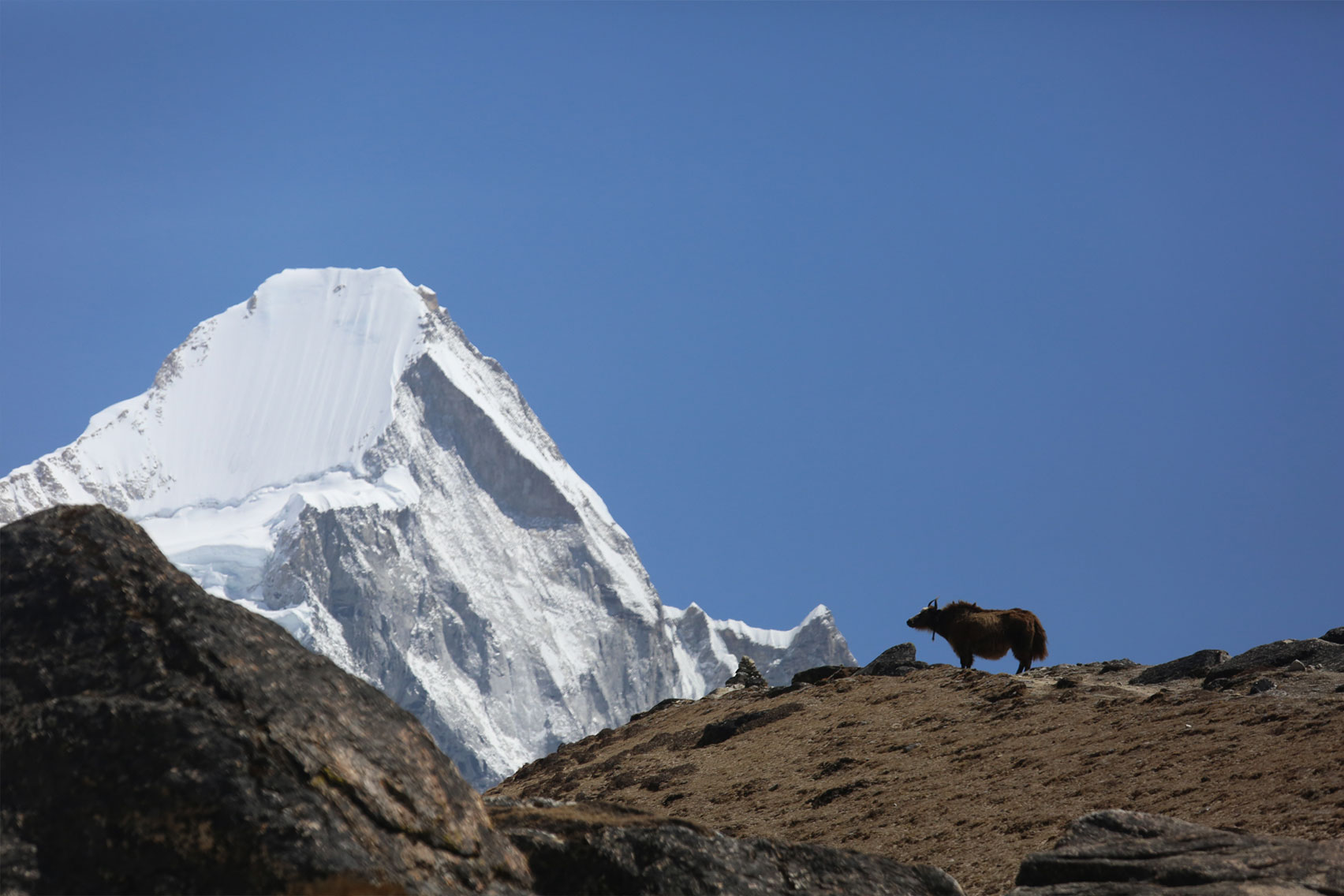 Day 11: Hike up to Kalapathar (5545m) and trek down to Lobuche (7 hrs, 4980m)